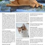 Att köpa katt - sid 2