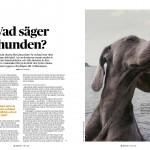 Hundens språk - sid 1